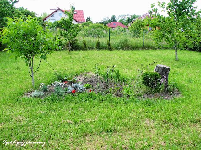 stworzenie klombu, ogród przydomowy