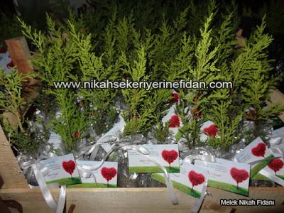 Ankara düğün nikah çamı Seda Kürşat 7