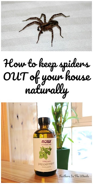 How to keep spiders out of your house naturally for How to keep spiders out of the house