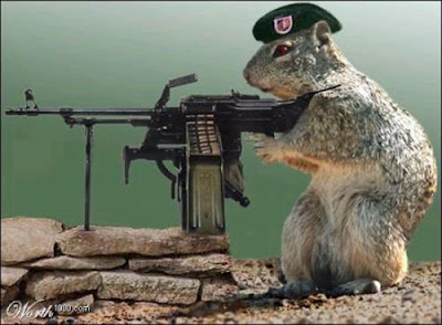 Funny Animals With Guns New Pictures 2013 Funny And Cute