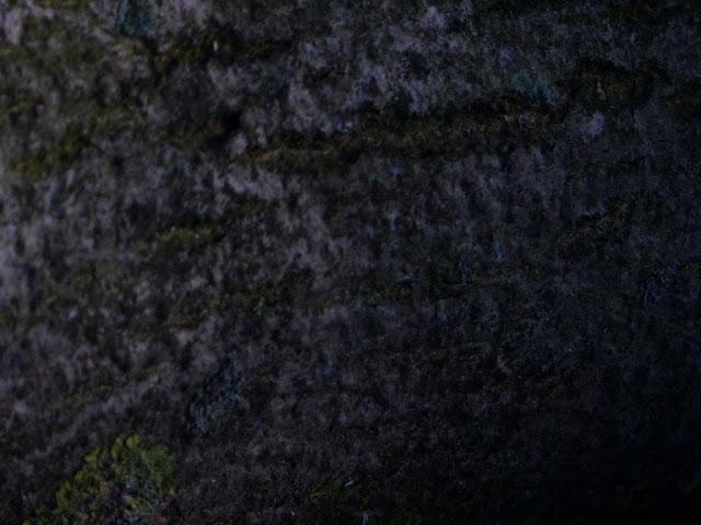 Rückblick Reha Depression Fortschritte Rückschritte Waldspaziergang