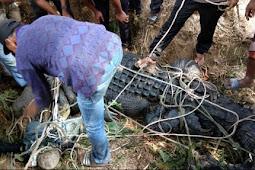 Heboh! Warga Aceh Timur Tangkap Buaya dengan Jaring Ikan, Videonya Viral di Facebook