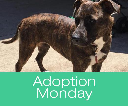 Adoption Monday: Meryl, Mixed Breed, Killeen, TX