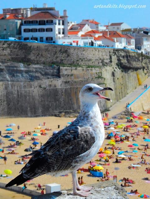 Terra de céu, sol, vento, e maresia... onde até as gaivotas, para a fotografia... sorriem... :-) Ericeira... onde o mar é mais azul!... / A land of sky, sun, wind, and salty air... where even the seagulls smile all the time... :-) Ericeira... where the sea is bluer!...