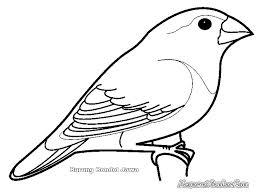 74 Gambar Kolase Hewan Burung HD