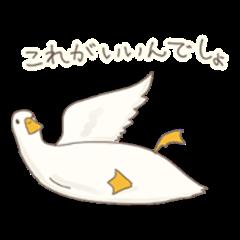 Funny Call Ducks 6th