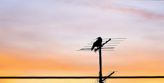 bird sitting on antenna