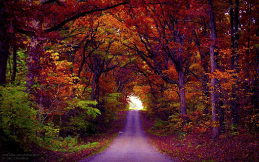 Image result for Autumn Tree Tunnel, Smuggler's Notch State Park, Stowe, Vermont, USA