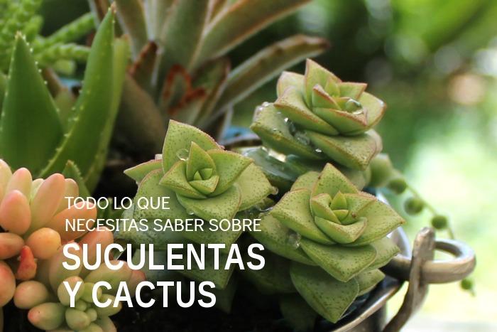 Todo lo que necesitas saber sobre plantas suculentas y for Informacion sobre el cactus