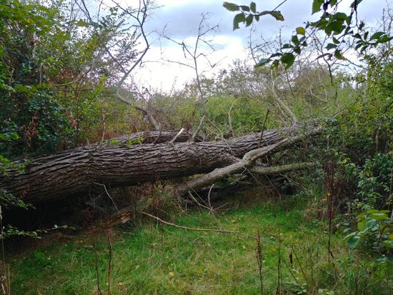 Photograph of Tree blocking footpath 86 in the north-west corner of Leach Fields Image by North Mymms News released under Creative Commons BY-NC-SA 4.0