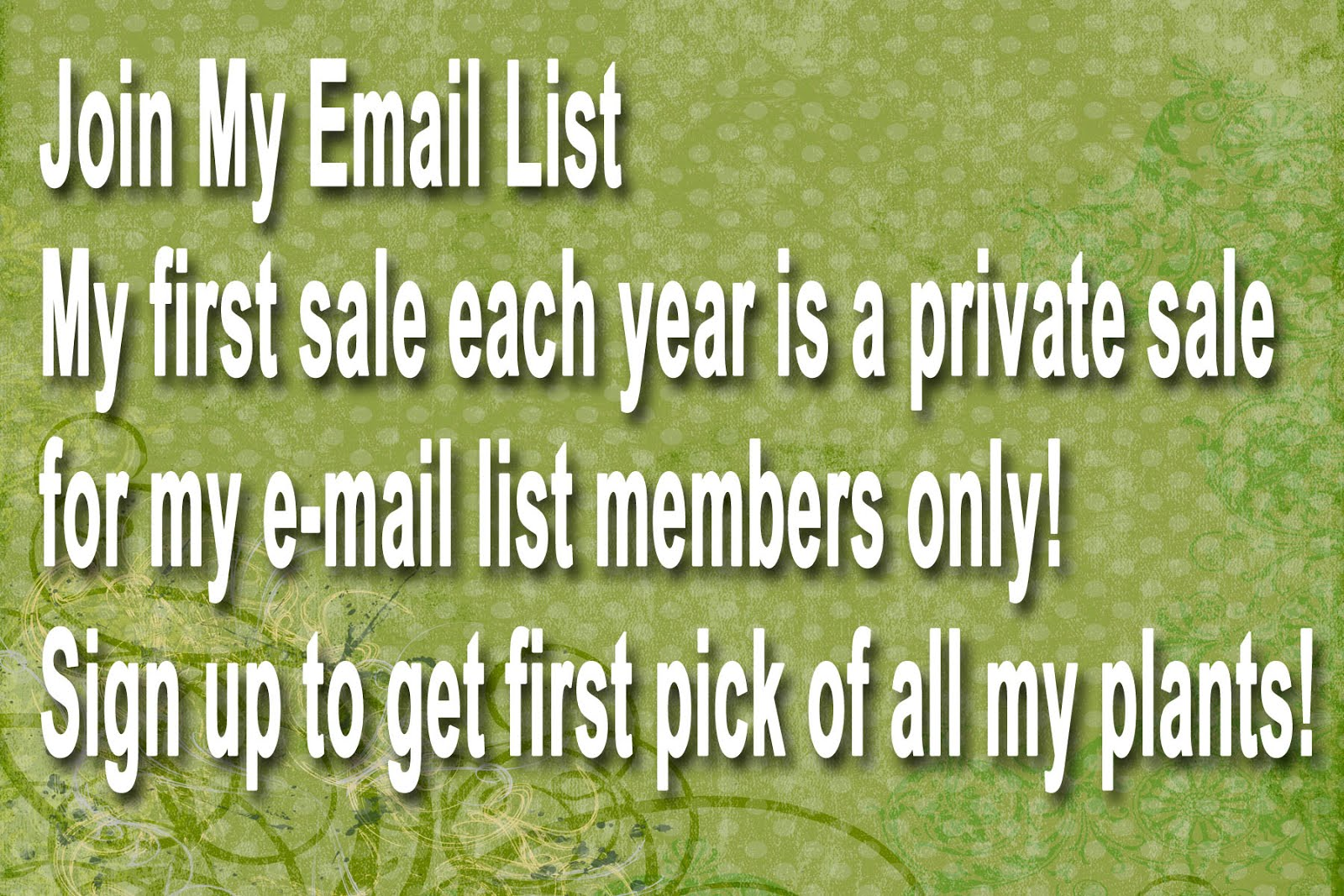 Mimi's Email List