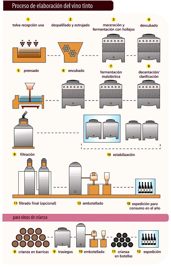 Urbina vinos blog organizacin de una bodega equipos en la elaboracin de vino tinto el mosto fermenta junto a los hollejos mientras que para la elaboracin de vino blanco y rosado el mosto fermenta sin ccuart Gallery