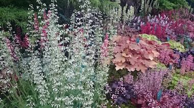 Heuchera, Tiarella y Heucherella, colores en la sombra del jardín