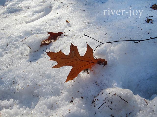 листики на снегу