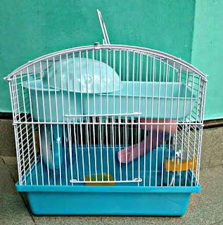 Kandang yang Baik untuk hamster