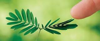 Macam Gerak Pada Tumbuhan, Contoh dan Gambar