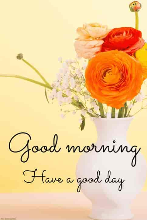 hd flower pot image of good morning have a great day