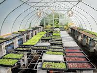 Mengupas 7 Cara Jitu Budidaya Microgreens Di Rumah & GreenHouse
