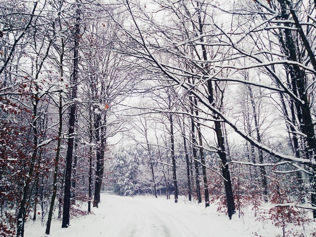 Spacer po lesie, czyli sposób na pozytywny nastrój zimą