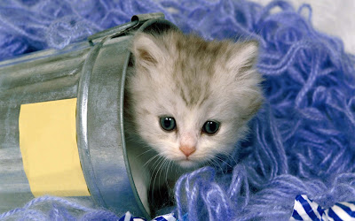cat-sleeping-in-the-tab
