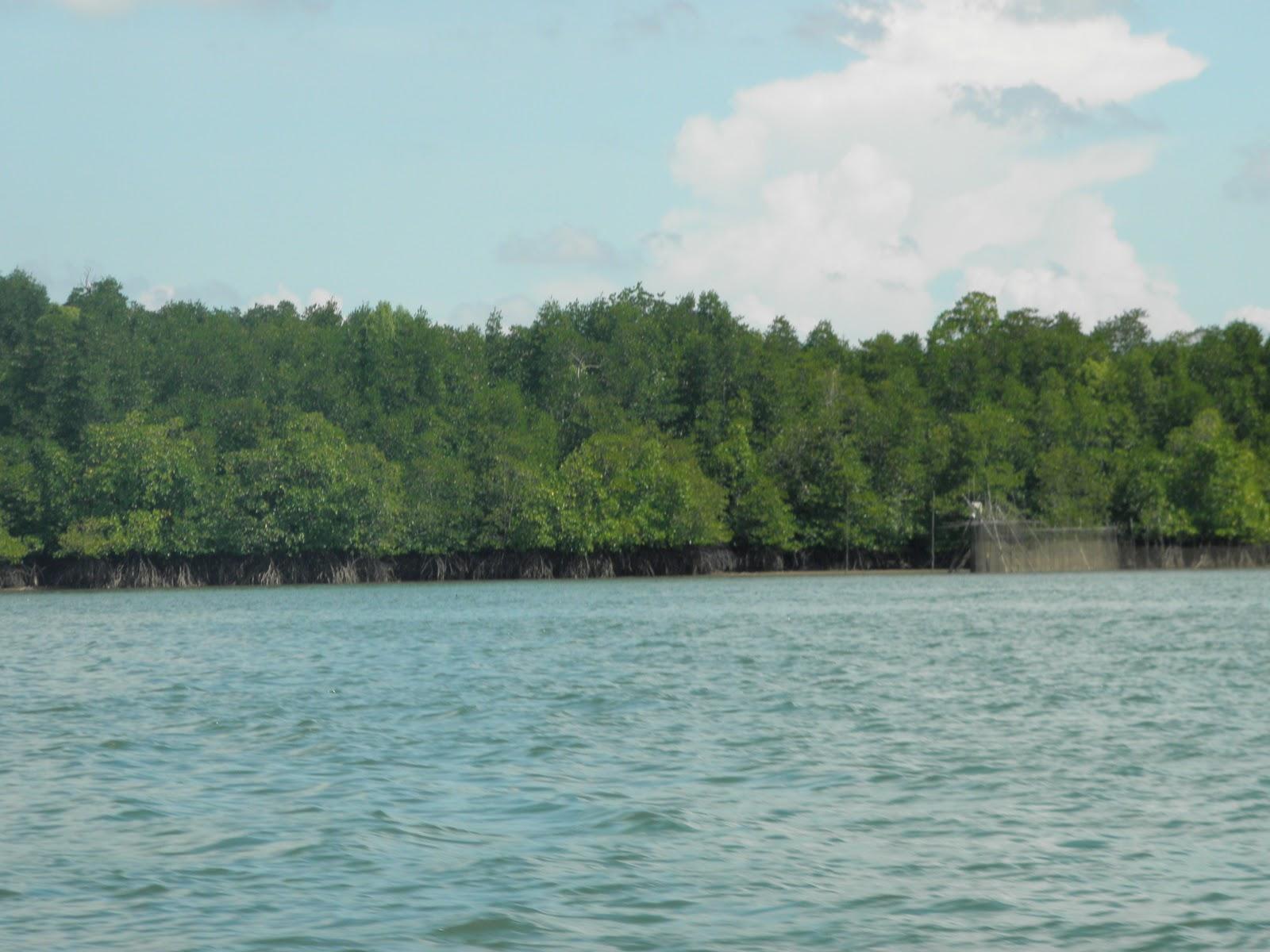 Dammayanti Utami Bastian: Permasalahan Dalam Hutan Mangrove Di Kalimantan Timur