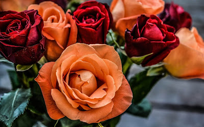 orange and red roses widescreen resolution hd wallpaper