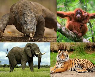 10-Hewan-Fauna-langka-yang-dilindungi-di-indonesia-dan-terancam-punah