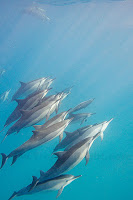 http://www.tropicallight.com/water/dolphins/12apr19dolphins/12apr19dolphins.html