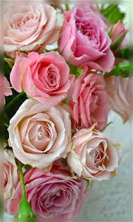 Flores rosas color rosa tiernas fondos wallpaper para teléfono móvil resolución 480x800