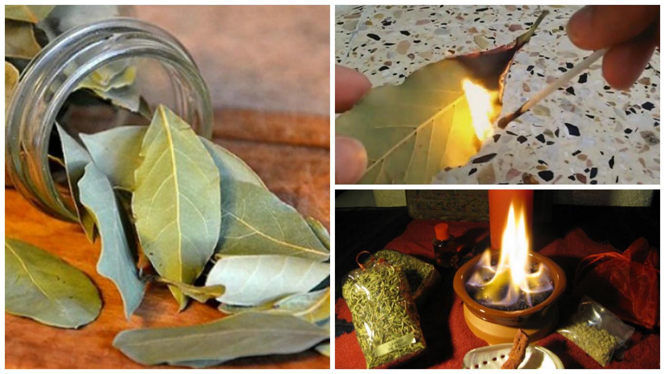 Para que sirve quemar hojas de laurel