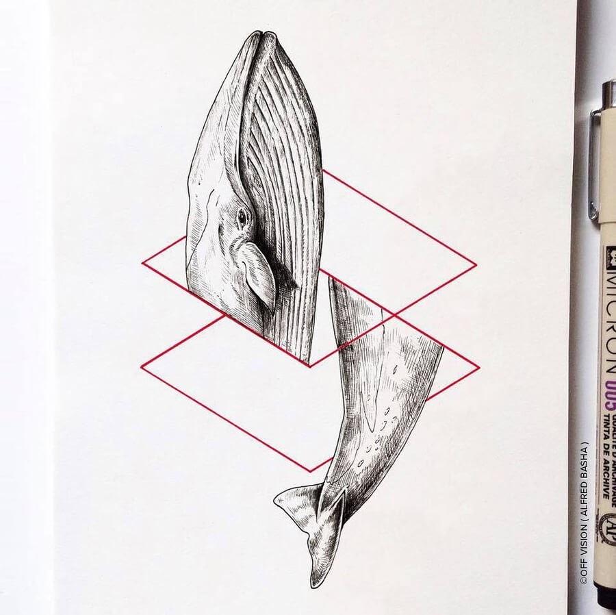 09-Whale-Alfred-Basha-www-designstack-co