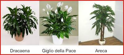 migliori piante feng shui a natale immagine