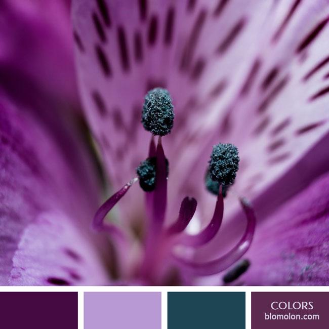 variedad_en_color_color_63