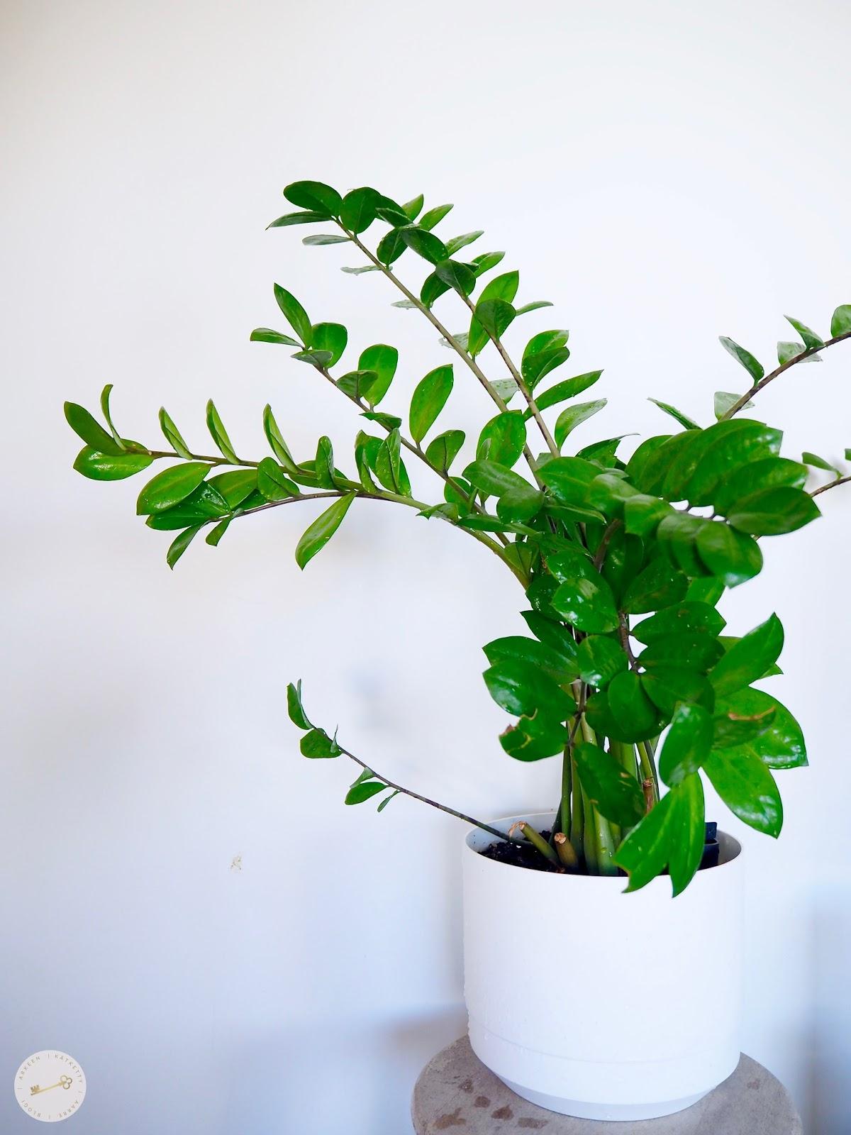 Marraskuu on monen mielestä ankea ja masentava. Aion #mainiomarraskuu -projektillani yrittää löytää yhtä hyvän kukoistuksen kuin kuvalla olevalla kasvilla on.