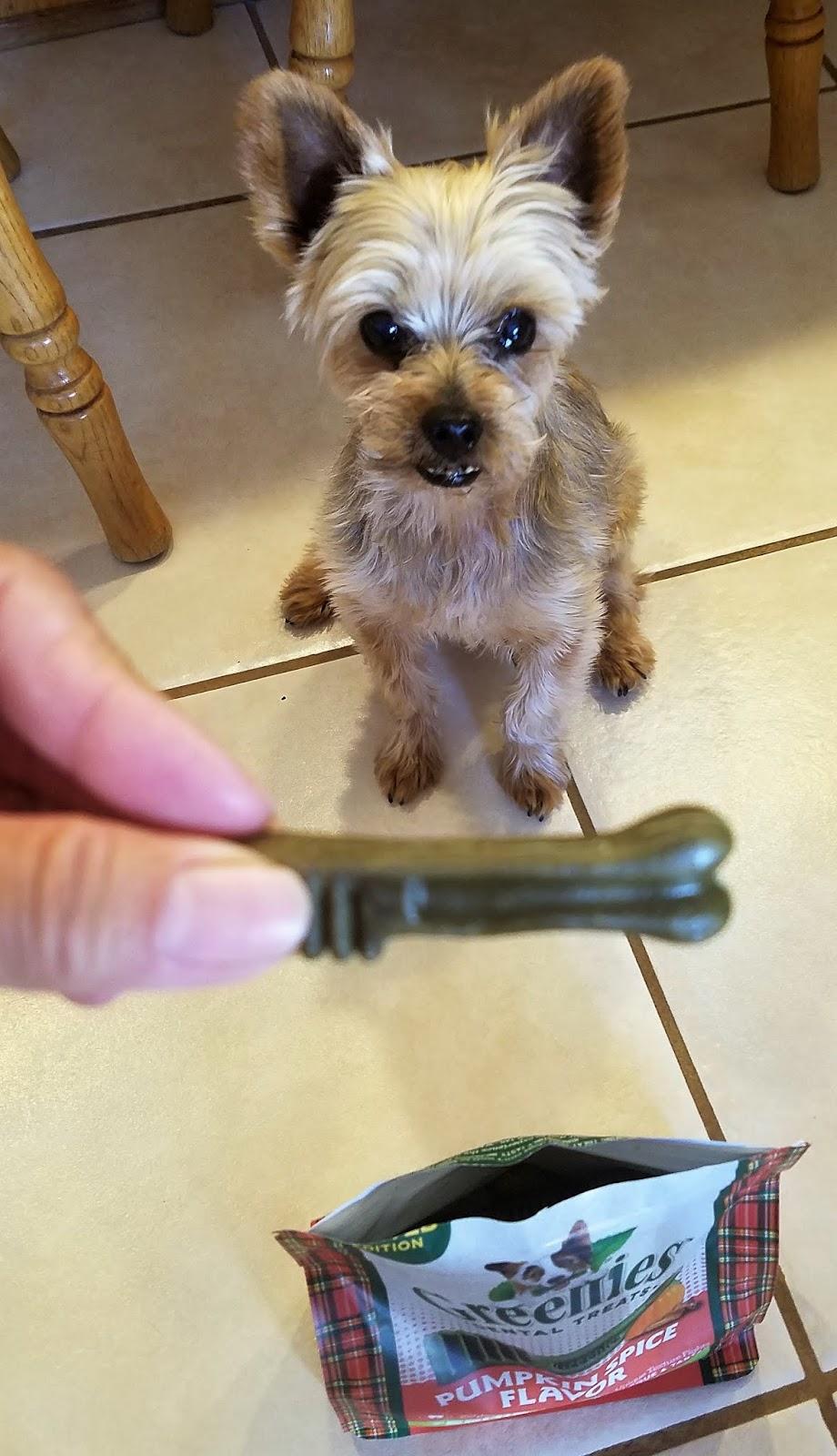 Dog Monitor Treat Dispenser