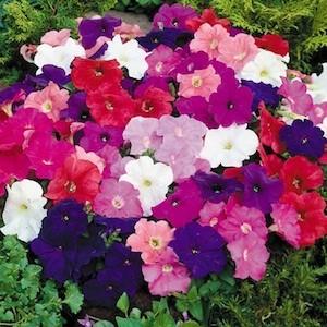 Martin design ita vasi per piante da esterno for Petunie perenni