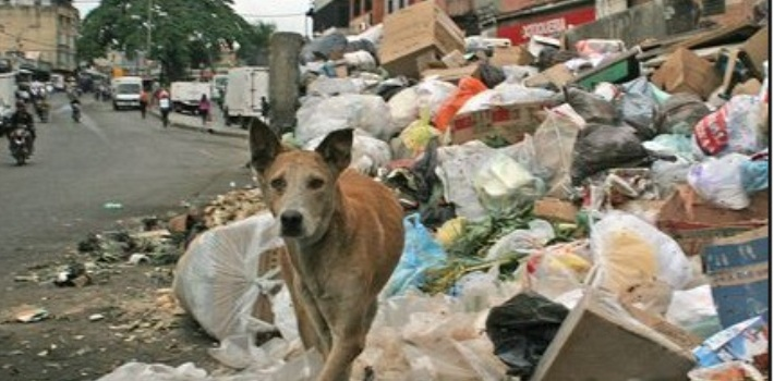 Venezuela Eat Cats And Dogs