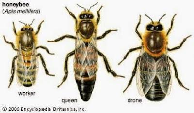 Habitantes de una colmena.