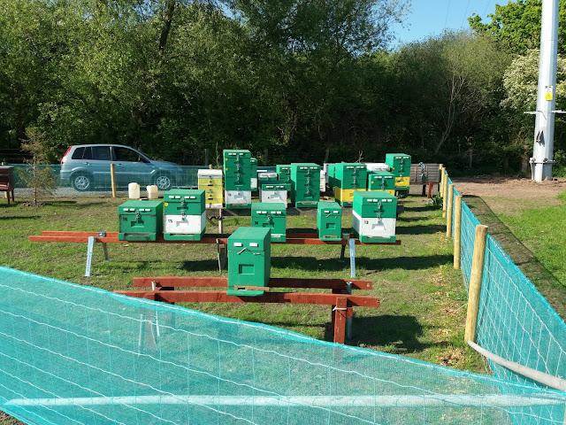 Τα μελισσάκια του Ανδρέα στο Λίβερπουλ της Αγγλίας