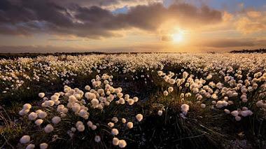 Fotos de paisajes de flores silvestres premiadas en IGPOTY N.11