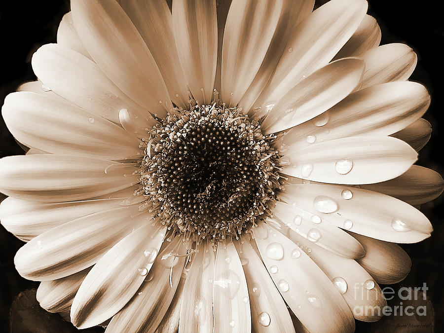 gerbera and daisy flower wallpaper | Zone Wallpaper ...