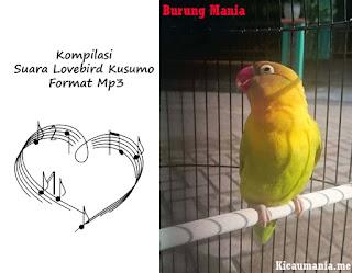 Kompilasi Suara Lovebird Kusumo Format Mp3