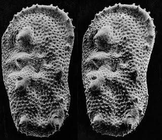 Ostrácodos fósiles