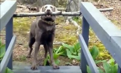 ¿Resolverá este perro su problema? | Vídeo