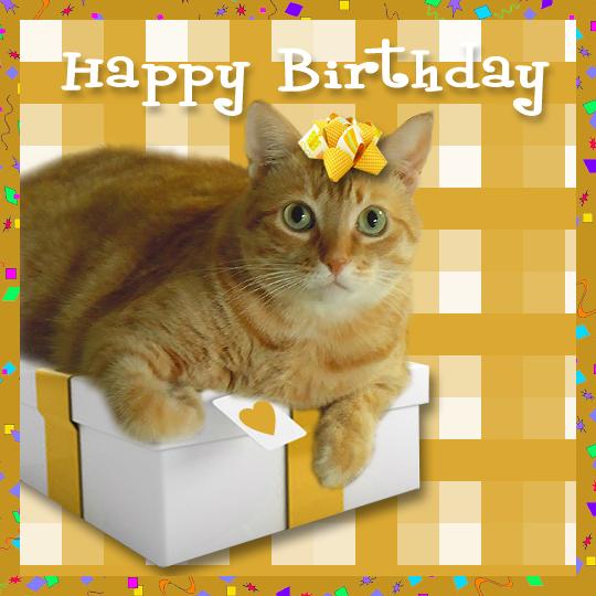 Birthday Orange Cat: Sitcoms Online Message Boards