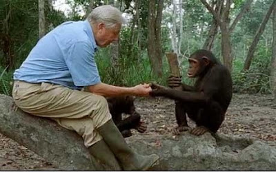 David Attenborough and monkeys