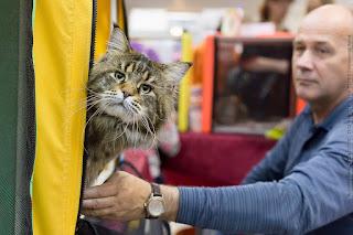 «Покупка породистого котенка. Что делать, чтобы не ошибиться?»