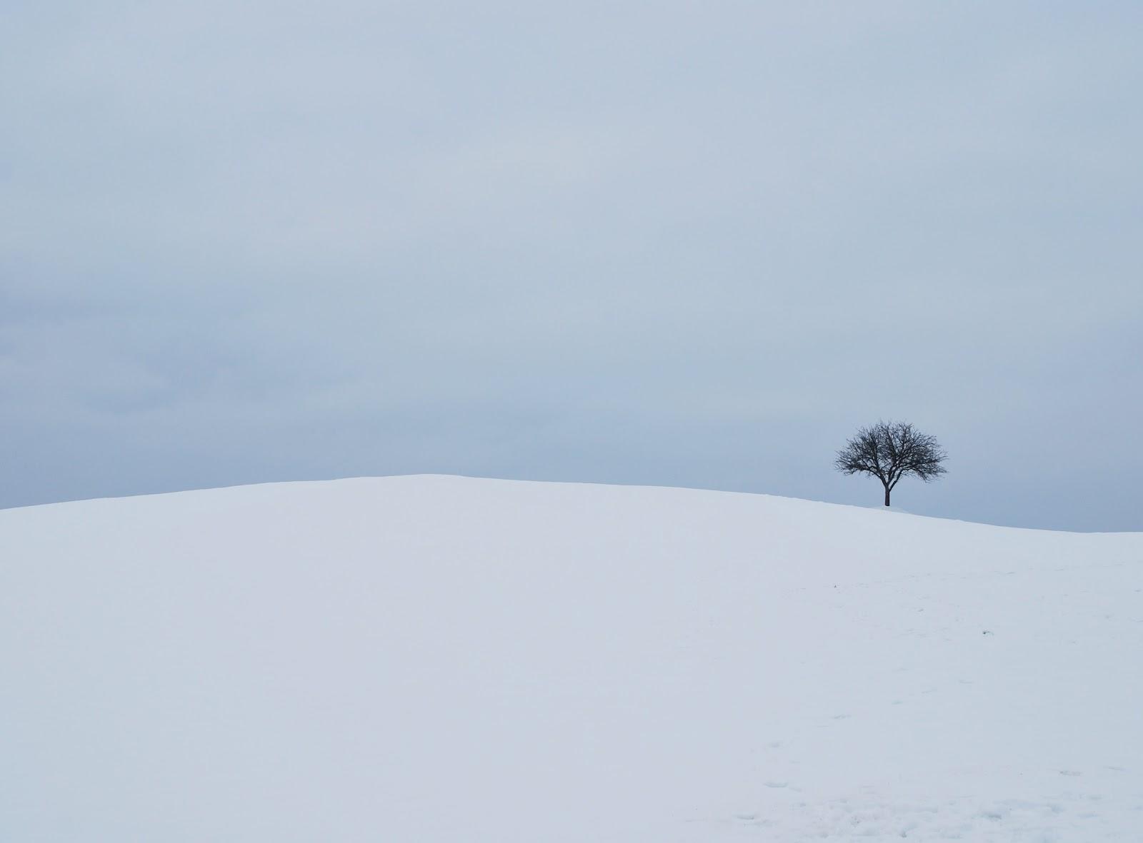 一本の木が遠くに生えた雪の積もった丘