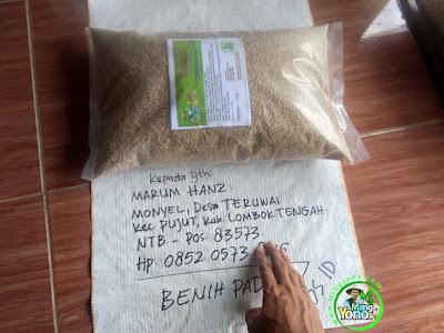 Benih Padi TRISAKTI pesanan MARUM HANZ (Sebelum Packing)
