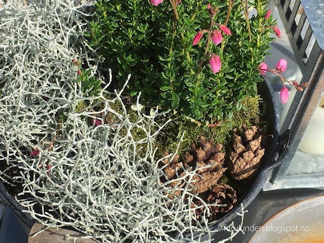 Inspirasjon til høstplanter i krukker - del 5. Nærbilde. Furulunden.